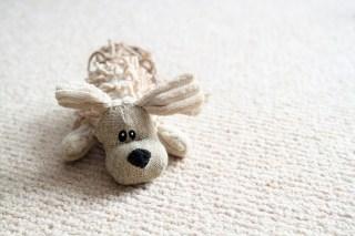 dog-toy-photo-dog-life