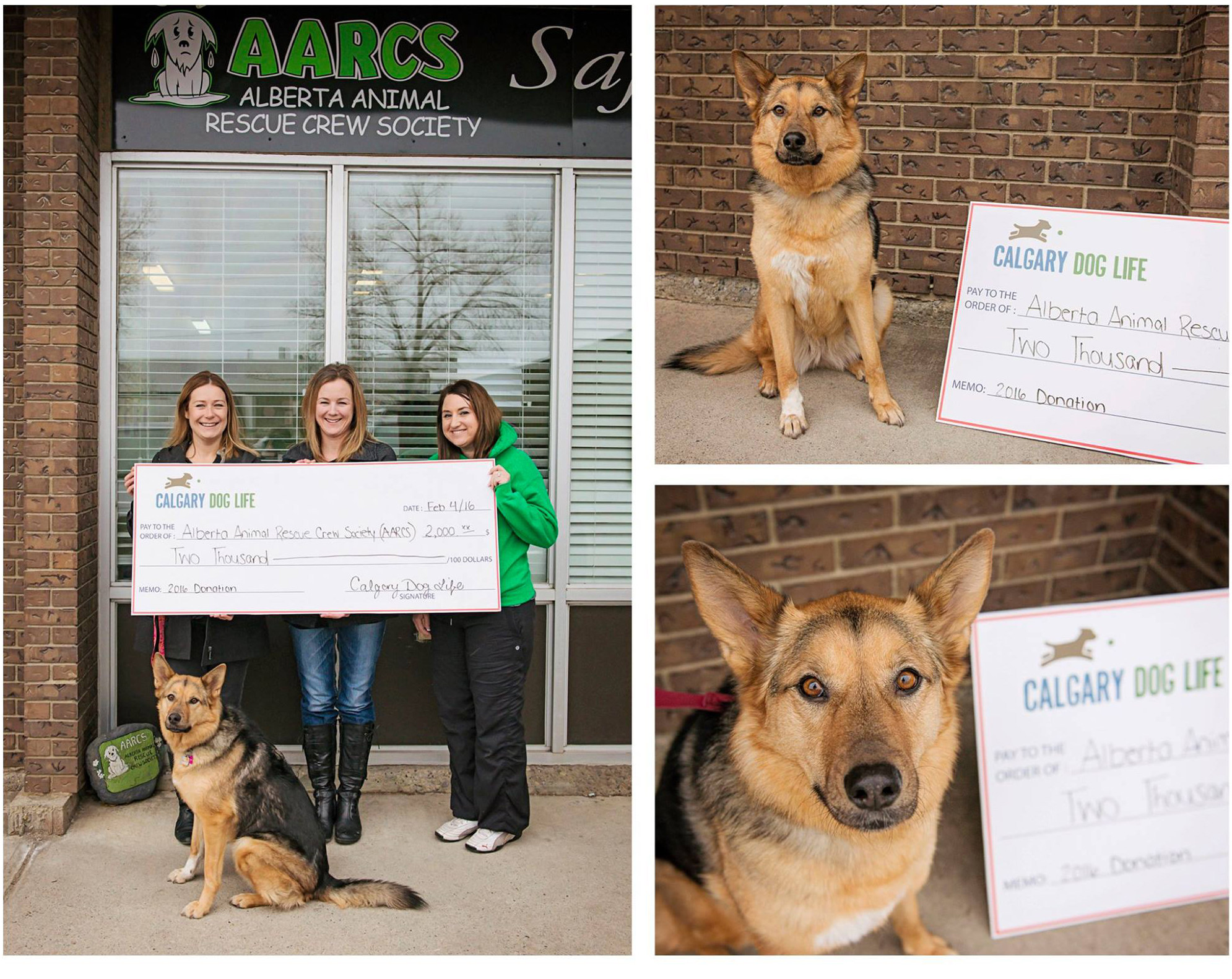 calgary-dog-donations-aarcs
