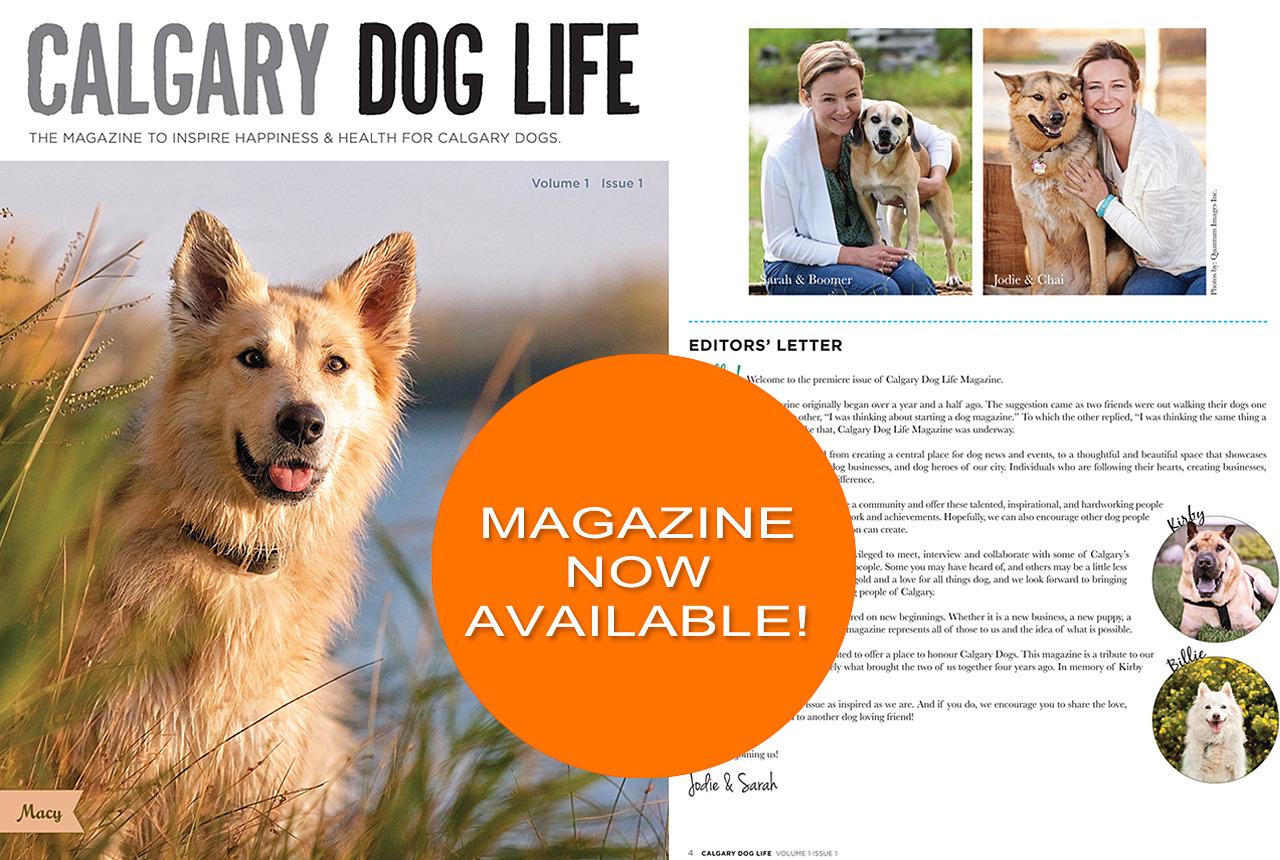 Calgary Dog Life Magazine!