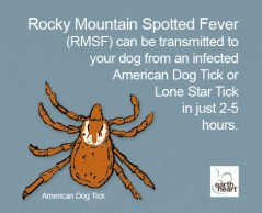 Tick Safety for Dogs Amer Dog