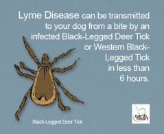 Tick Safety for Dogs Black Leg