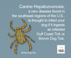Tick Safety for Dogs Brown Dog