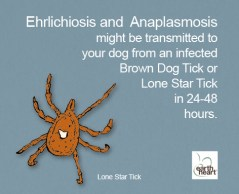 Tick Safety for Dogs Lonestar
