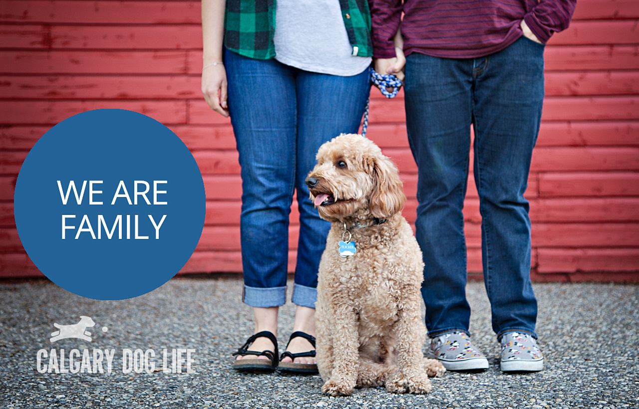 Treating Pets Like a Valued Member of the Family