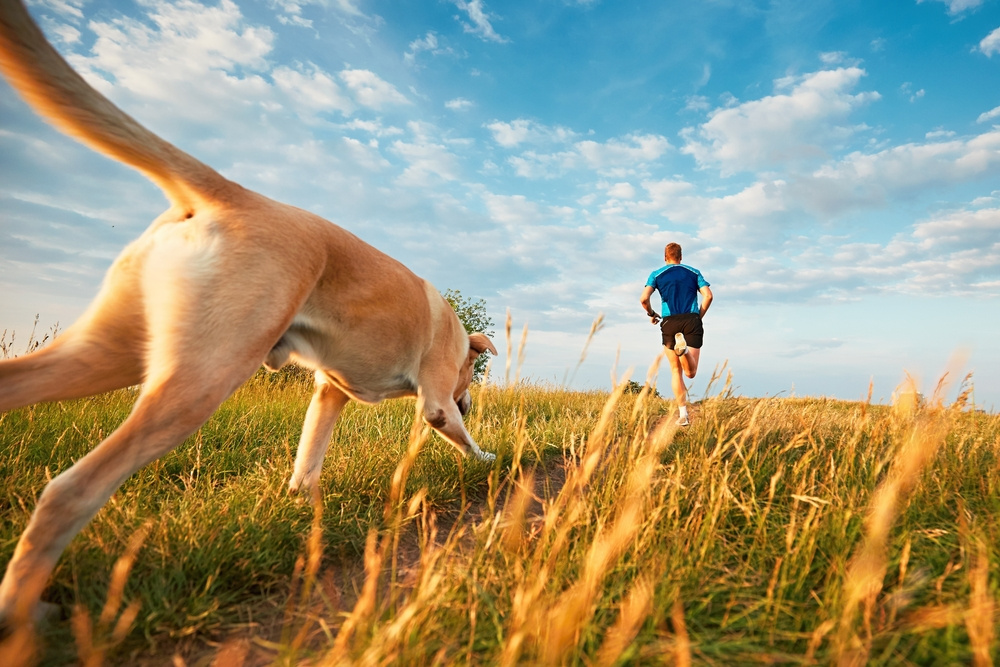 Why Your Dog Makes the Best Running Buddy
