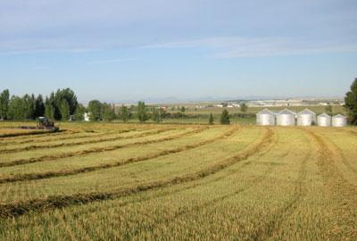 wheat-bins