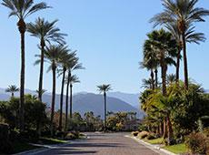 palm trees thumb copy