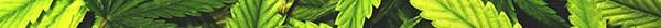 Marijuana Background copy copy