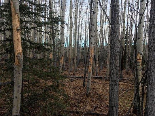 Sibbald Creek 2 600