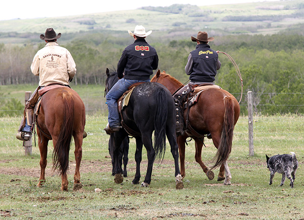 Bringing up cattle from the land, Thurston (right) is followed by his dog, Vegas. Photo by Casey Richardson.