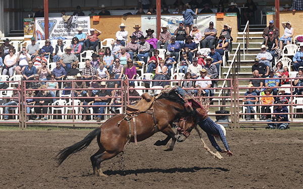 A saddle bronc competitor gets bucked off his horse on Saturday, June 16. Photo by Casey Richardson.