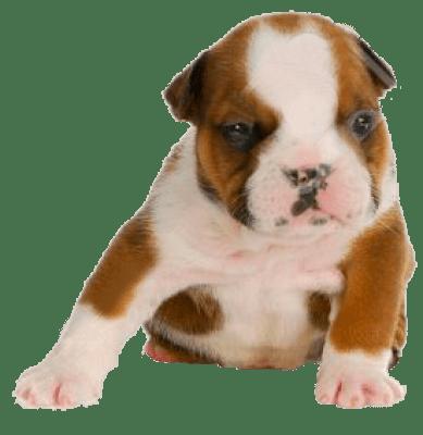 estreñimiento en cachorros