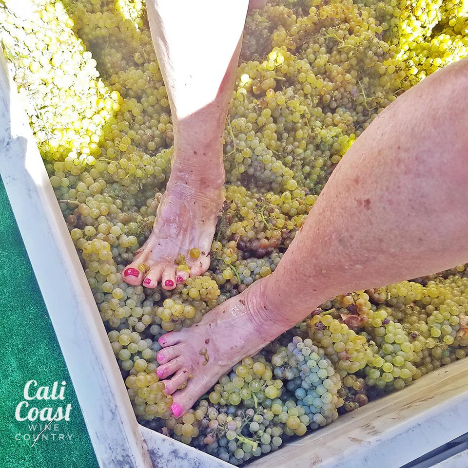 The Great Grape Stomp –  Kalyra Winery