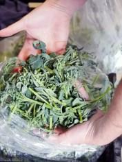 Villa Creek Chef Tim Veatch Veggies by Liz Dodder