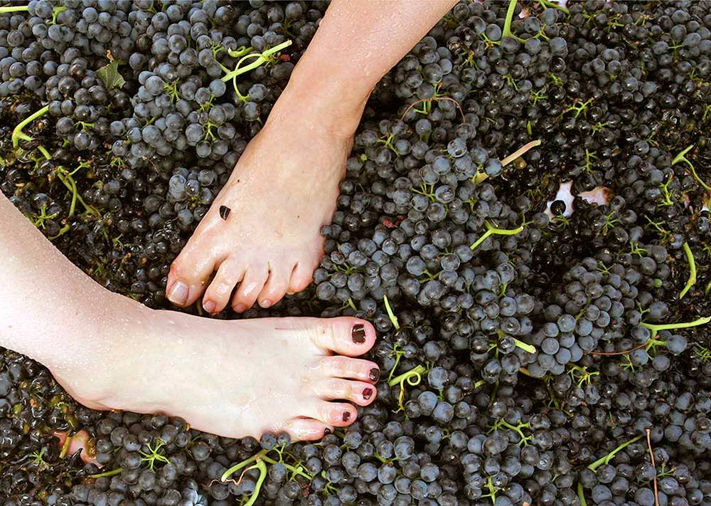 Grape Stomping Parties in Santa Ynez Valley