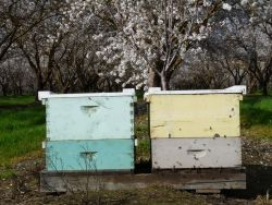 USDA Funds $3 Million to Improve Bee Health