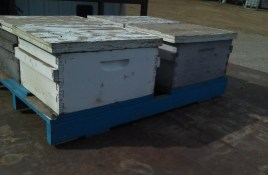 Kings County Bees-1