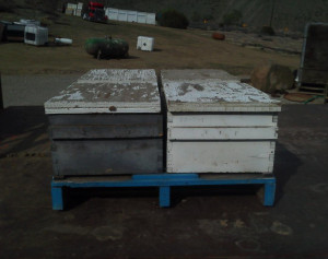 Kings County Bees-2