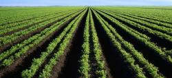 Imperial County Breaks Ag Production Record in 2013
