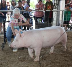Great-Grandmother Wins Dixon May Fair Hogcalling Contest