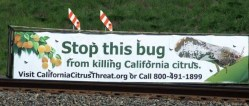 Everyone Plays a Part in Protecting California Citrus