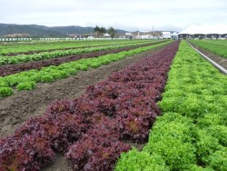 2015 SPECIALTY CROP BLOCK GRANT PROGRAM WORKSHOPS