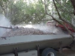 Almond Harvest Underway