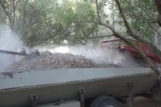 almond-tree-shaking-harvesting