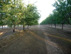 Almond Sustainability a Priority