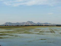 Rice Weed Meeting Taking Place on Sept. 15