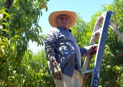 Who Safeguards CA Farm Workers' Rights? Part 5
