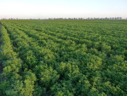 Annual Alfalfa and Forage Field Day Sept. 19