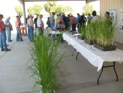 UC Rice Weed Course, Sept. 6, 2019