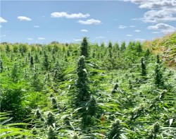 World Ag Expo To Focus on Hemp