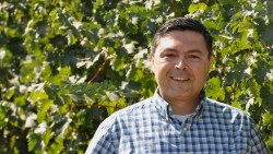 Cover Crops May Help Sequester Carbon in Vineyards