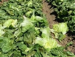 COVID Virus Shut Down Food Service Supply Chain