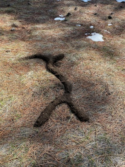 Gopher 'glyphs left after the snowmelted.