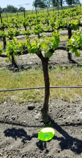 winery farm land disc golf