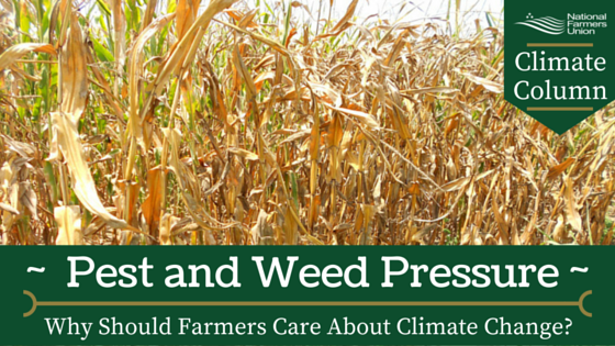 Climate Column - Pest and weed Pressure