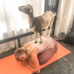 Trying Out Goat Yoga in Los Angeles