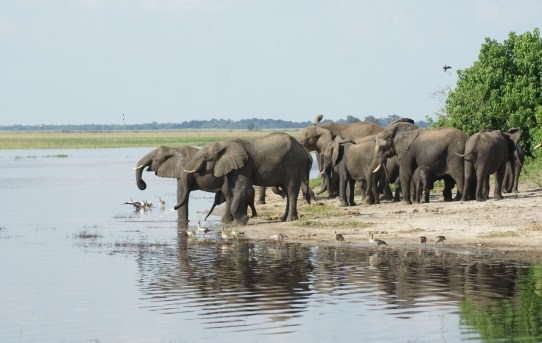 Visiting Botswana's Chobe National Park and Okavango Delta