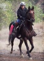 Renie Burnett and Wild West (Willy) 2011 Tevis
