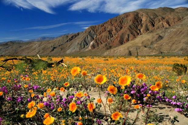 Resultado de imagen para Desert State Park,