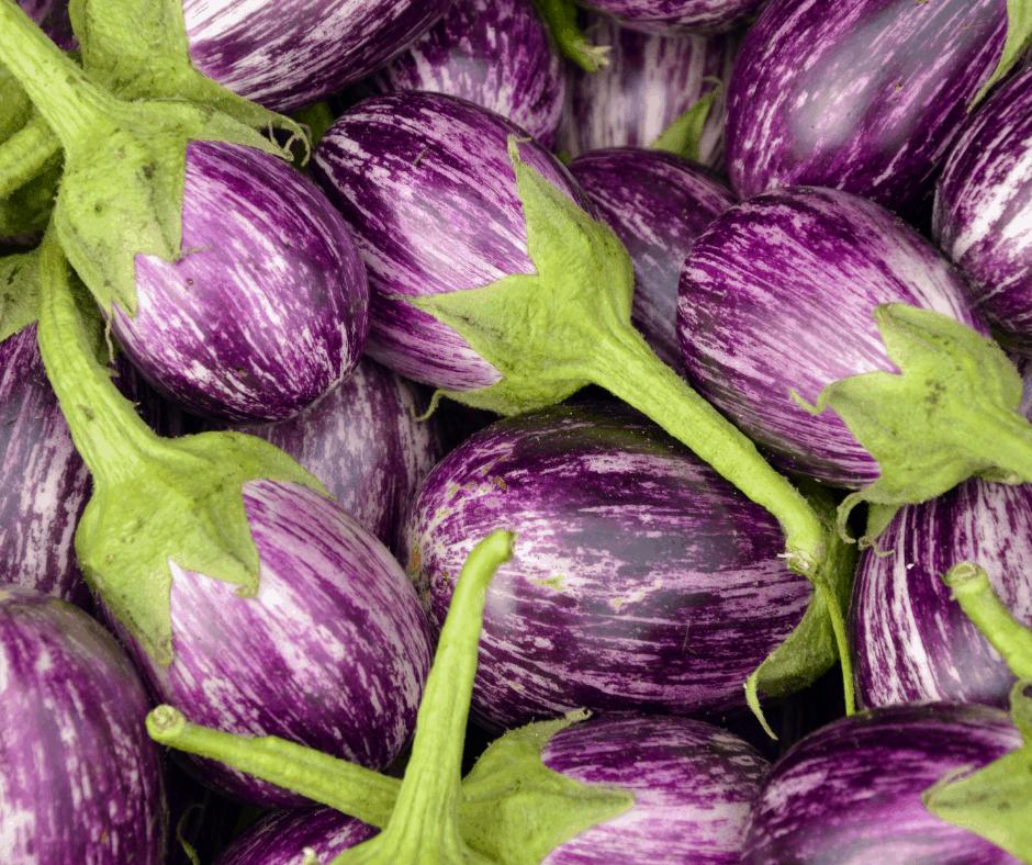 Rosa Bianca Eggplants