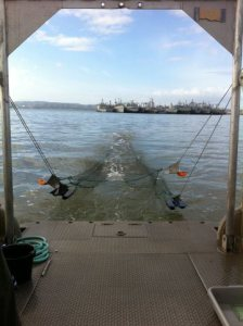 Fall midwater trawl. Photo: California Department of Fish and Wildlife
