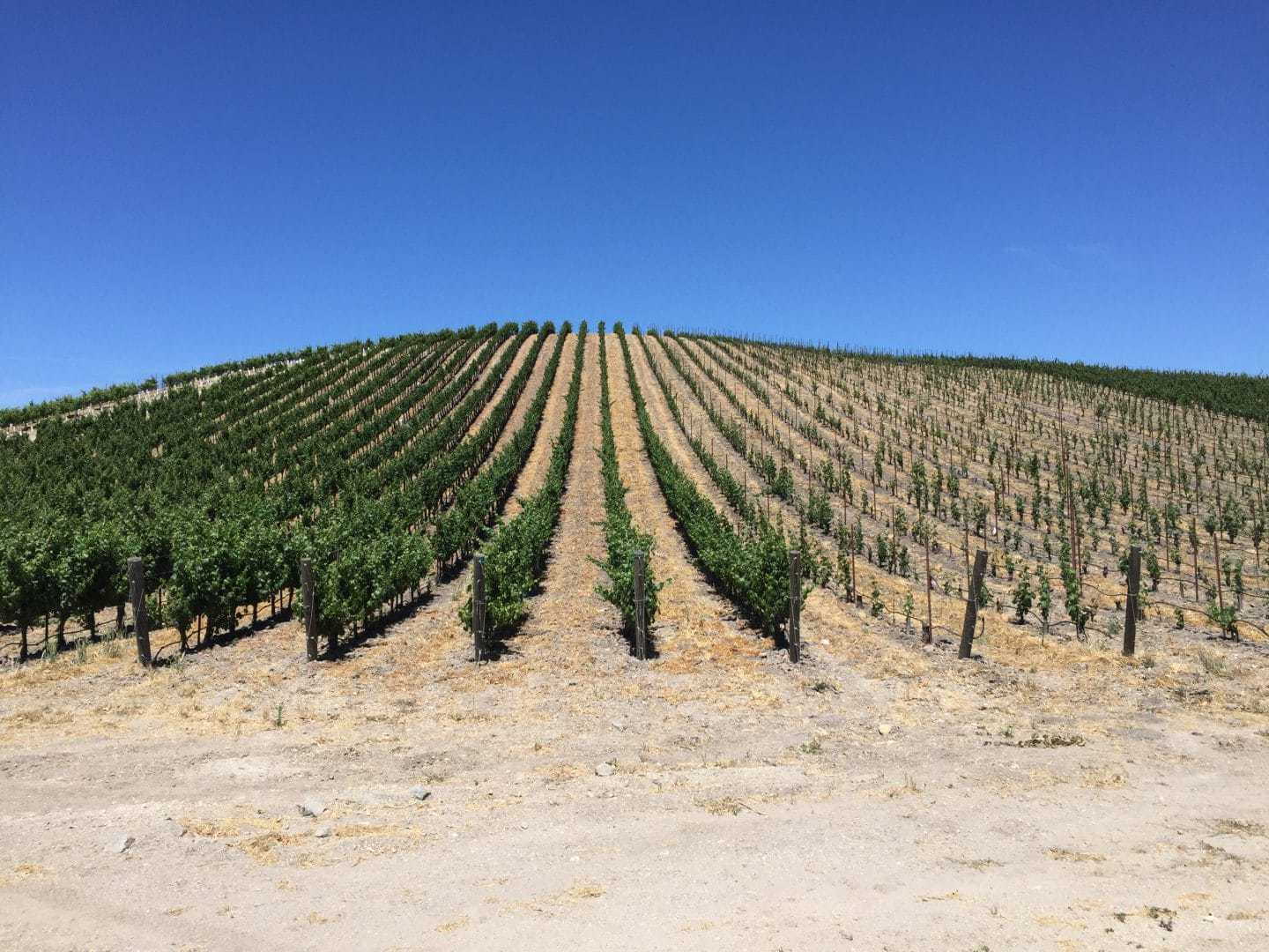 California vineyard winery paso robles