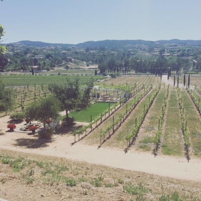 Temecula Winery Cougar Vineyards View