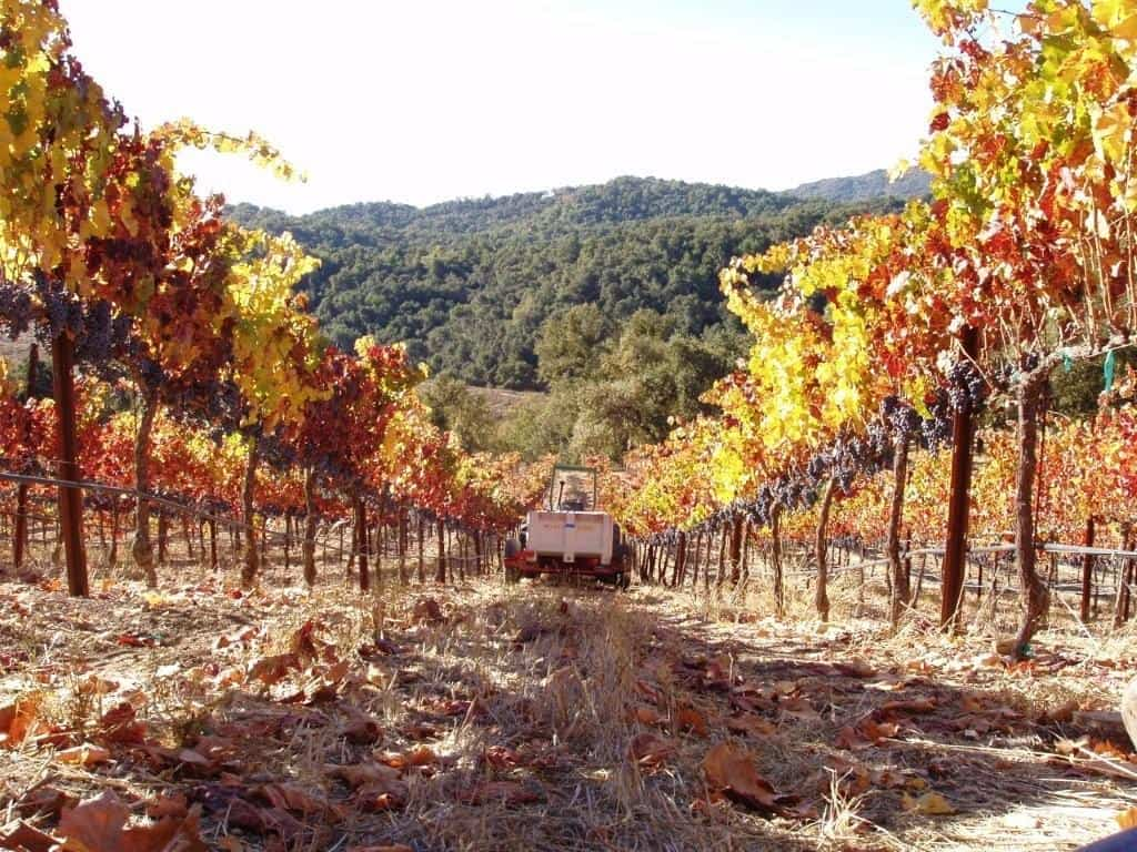 Hearthstone Cab Franc Harvest paso robles