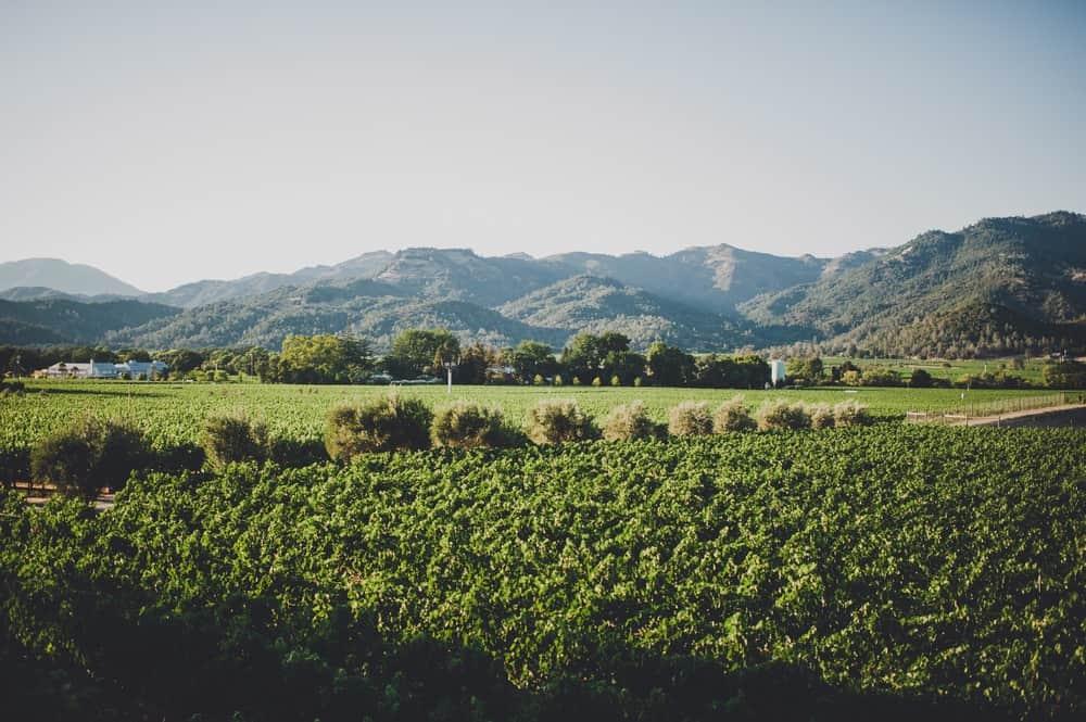 Madrigal Vineyard in Napa