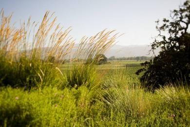 Miner Family Winery view napa